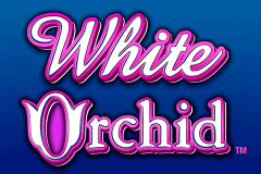 logo white orchid igt slot game